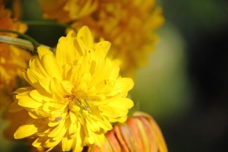 Yellow flower  Coneflower Stock Photo - 17288910