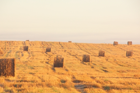 Slanted field  Hay piles   photo