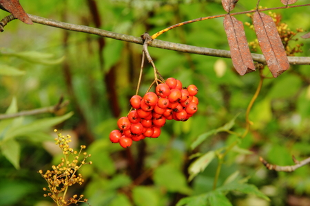 ashberry: Ashberry