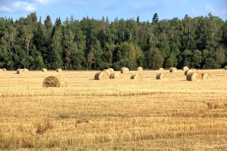 Fall. Slanted field. Fall in Moscow area. Field of slanted hay.