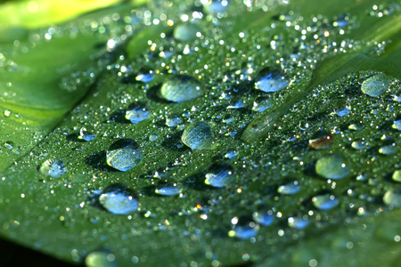 Rain drops on a leaf of a plant on a summer meadow.