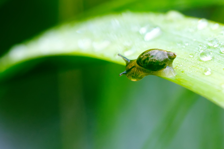 The little snail sitting on a leaf of a plant.