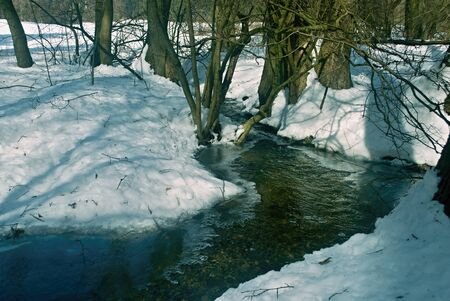 frozen creek: Winter frozen creek in the woods