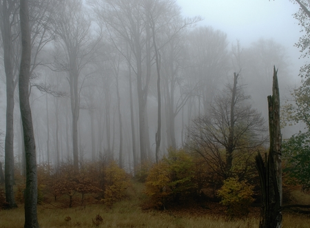 haunted: Fog in the beech forest on a haunted place
