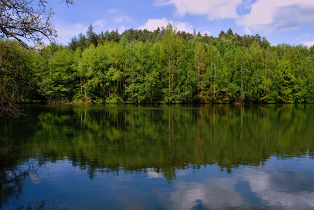 mirroring: Forest mirroring in a lake with cloudy sky