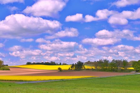 green meadows: Landscape with yellow fields and green meadows Stock Photo