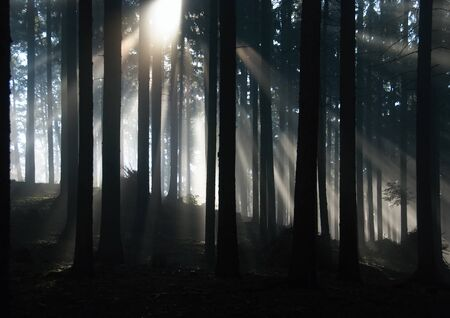 Sun rays shining througr forest