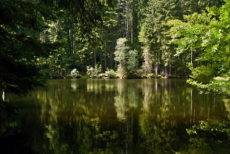 mirroring: Lake deep into forest with mirroring trees