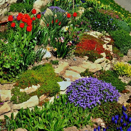 Jardin plein de fleurs en fleurs colorées Banque d'images - 44128915