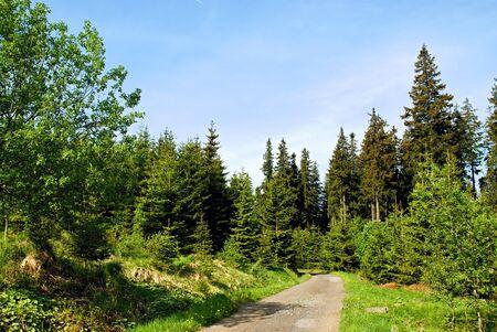 Calm path through green forest
