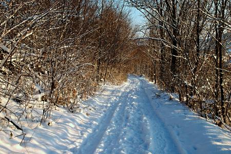 Snowy path through the bushes