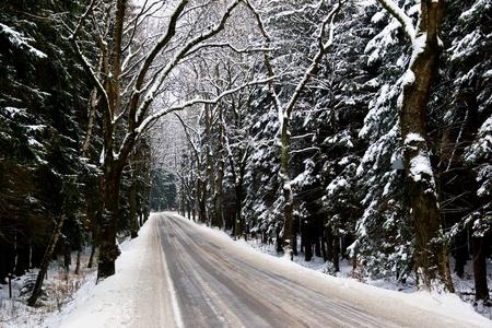 snowy road through forest