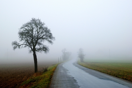 fog, road and sinle tree