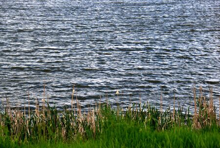 Waves in the wind on the surface of a pond with grass in the foreground
