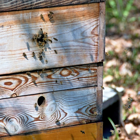 Apiary with flying bees at the entrance to the hive