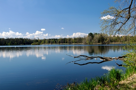 A pond under blue sky with mirroring forest Stock Photo