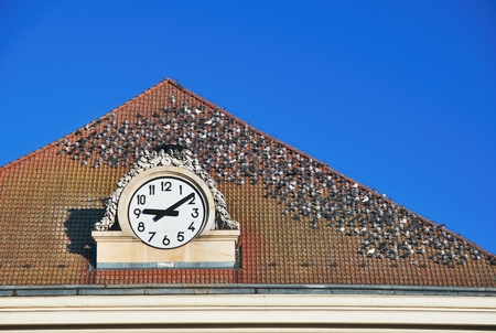 Flock of pigeons on a roof with clocks under a blue sky
