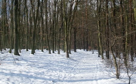 A path leading through a winter forest with trees without leaves