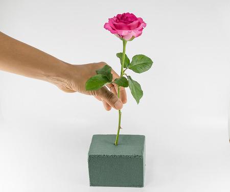 Main organisent roses Pour organiser des fleurs sur la mousse florale Banque d'images - 52720971