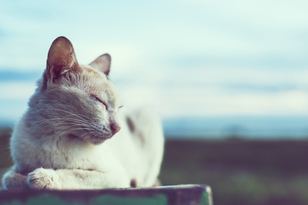 Cat sitting in the nature,copy space Banque d'images - 104978947
