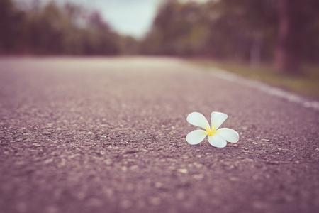 ใบดอ�ลีลาวดี (Frangipani) บนถนน Vintage Filter, Lonely concept