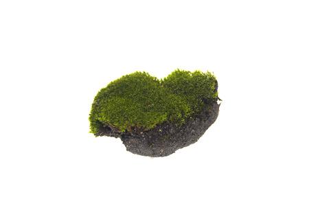moss isolated on white background Stock Photo