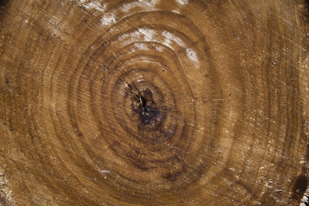 tree bark as a background in nature Stock Photo