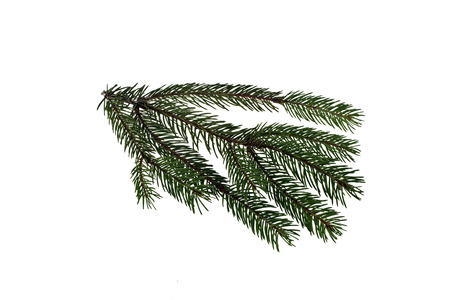 branch of Christmas tree isolated on white background Stock Photo