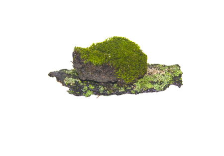 moss isolated on white background 스톡 콘텐츠