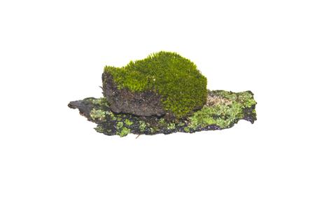 moss isolated on white background Stockfoto