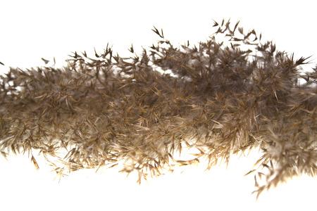 reed isolated on white background Stock Photo