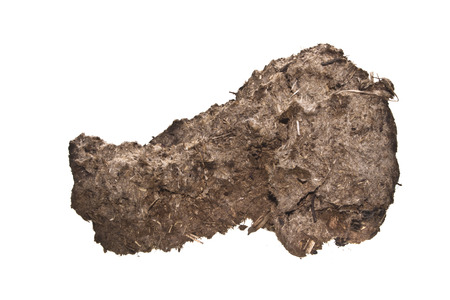 cow dung isolated on white background Stock Photo