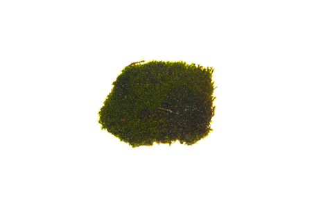 moss isolated on white background Stok Fotoğraf