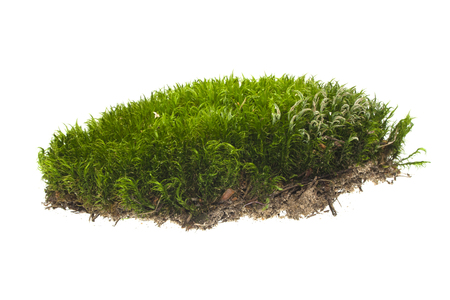 moss isolated on white background Banque d'images
