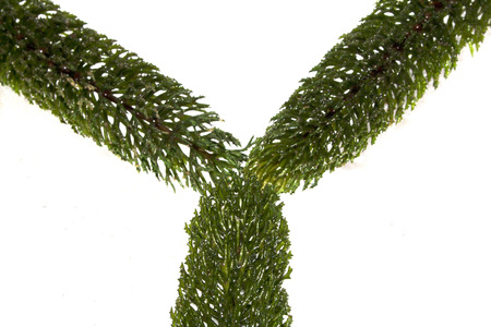 algae isolated on white background Reklamní fotografie