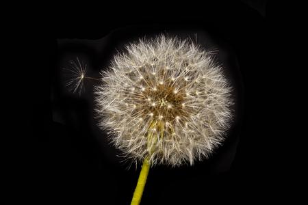 flower isolated on black background Banco de Imagens
