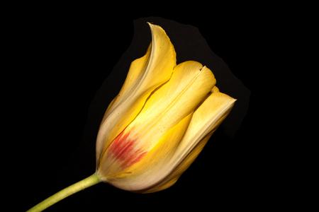 flower isolated on black background 版權商用圖片