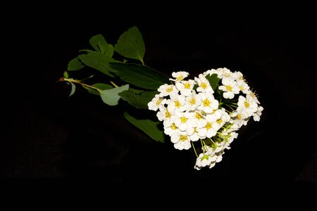 flower isolated on black background 写真素材