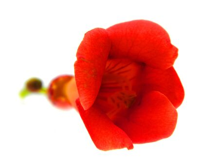 flower isolated on white background