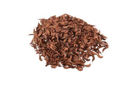 acacia seeds isolated on white background