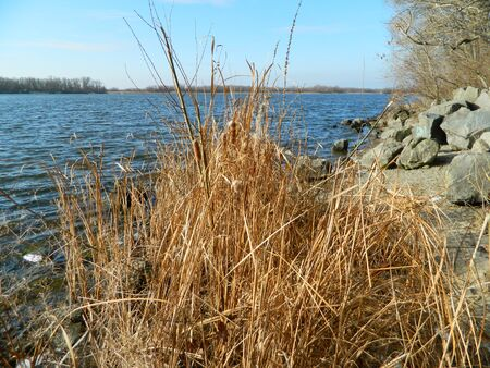 dry reeds in winter by the river Standard-Bild - 140372480