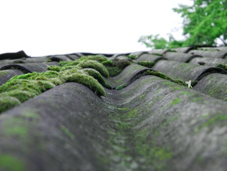 green moss on the roof of the house Фото со стока