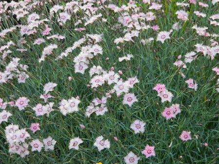 wildflowers after rain in summer