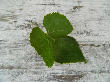 grape leaf isolated on wooden background
