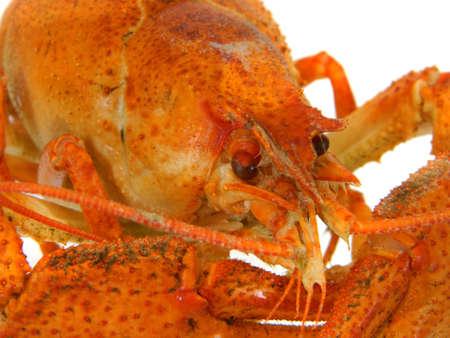 crayfish isolated on white background 写真素材