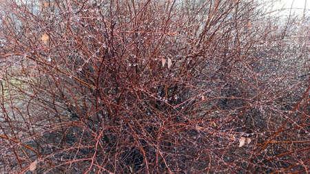 spring bush shot - close-up