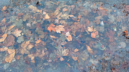 leaves in a puddle - close-up Imagens