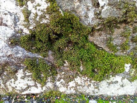 moss green shot - close-up