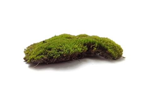 moss isolated on white background Фото со стока