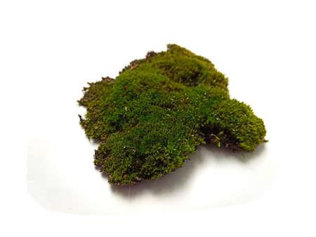 moss isolated on white background 版權商用圖片